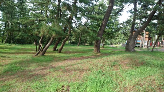 上越市『大潟キャンプ場』 格安の林間フリーサイト。 釣りや海水浴のベースキャンプとして最適の好立地