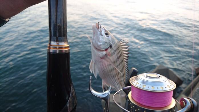 間瀬漁港で夜のウキフカセ釣りを堪能してきた!パワー全開の秋クロダイは強烈な引き!