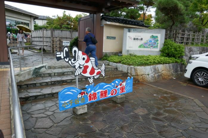 巨大錦鯉にエサやり!小千谷市観光におすすめ 錦鯉(にしきごい)の里