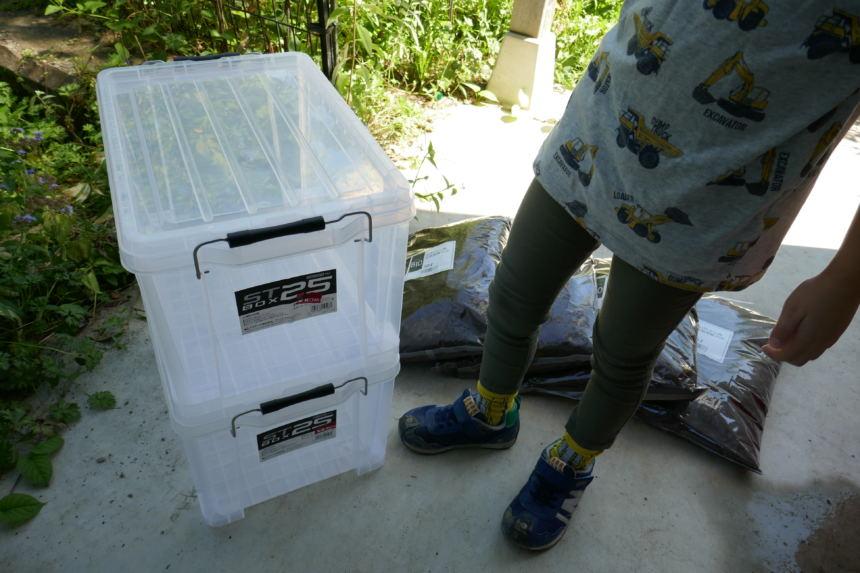 カブトムシの幼虫が生まれました。飼育ケースとマットを準備して育成に備える