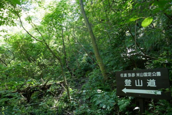 弥彦山登山 田ノ浦コース 夏のマイナーコースはどんな感じなのか登ってみた